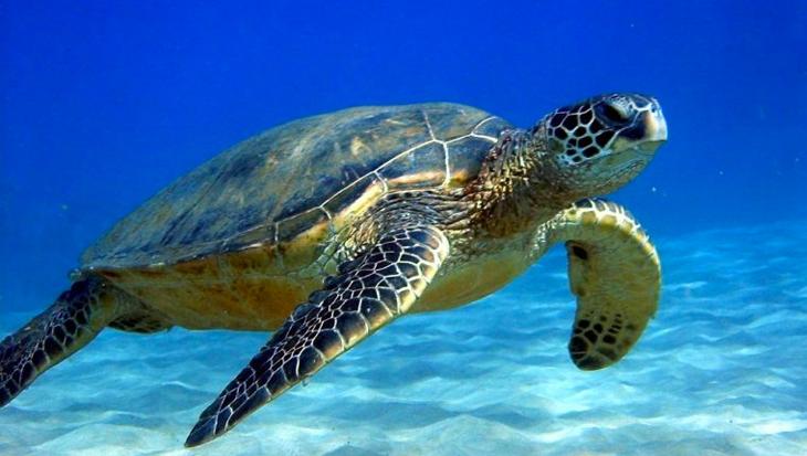 Wat is het geslacht van mijn schildpad?