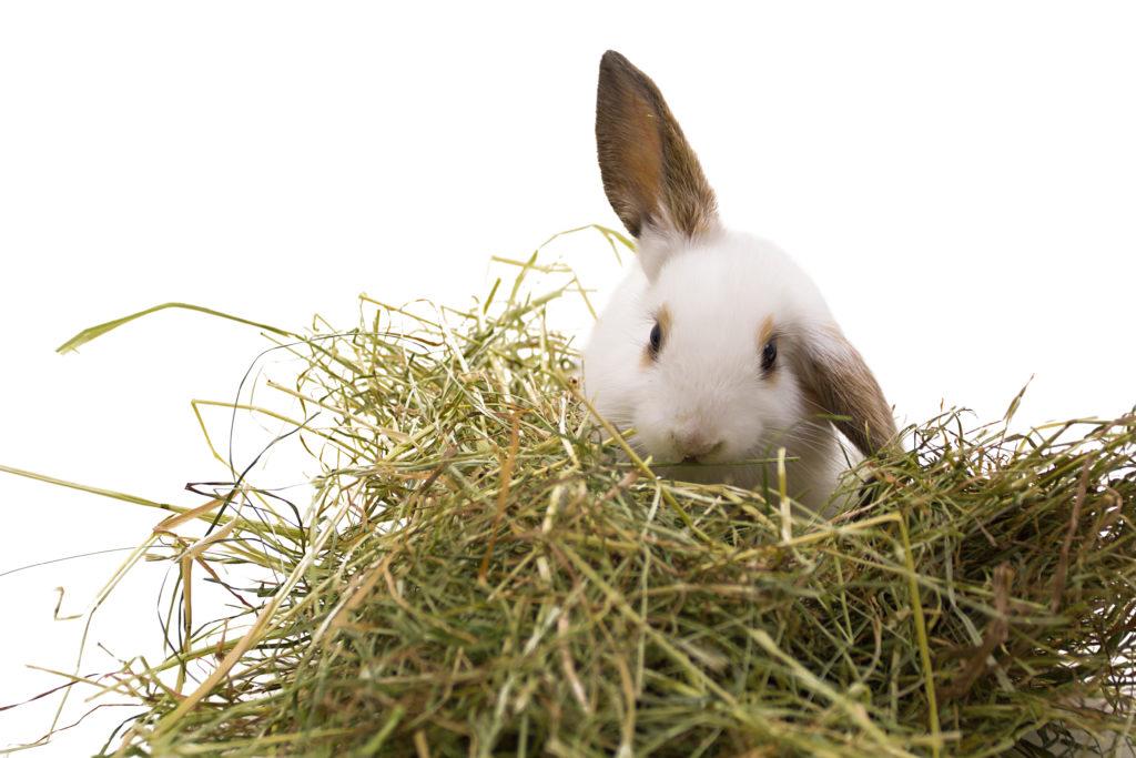 zindelijk konijn 2