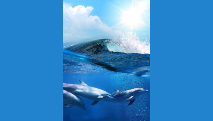 Zwanger? Dolfijnen zien het!