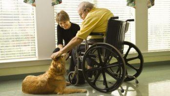 Gezondheid: dieren in de zorg