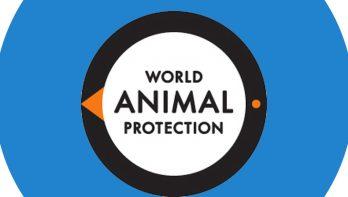 Meer aandacht voor dierenwelzijn