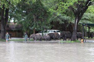 olifantjesweeshuis