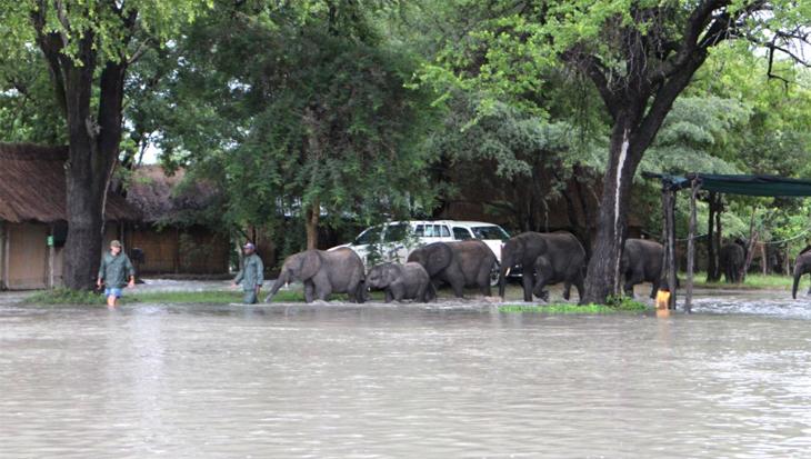 Natuurramp treft olifantjesweeshuis in Zambia