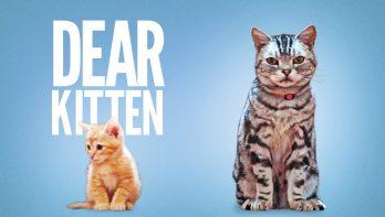 Dear kitten ...