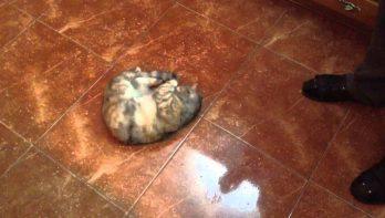 Kat is dol op olijven