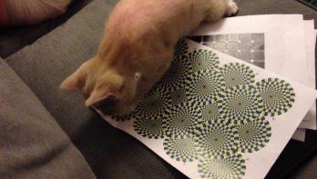 Kat versus illusie
