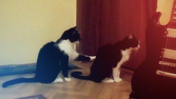 Kat zegt sorry