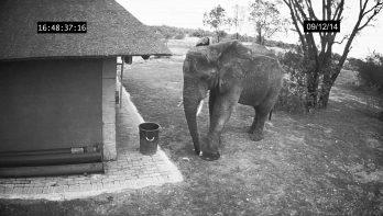 Opgeruimd staat netjes dat dacht deze olifant!