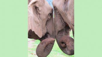 Rusthuis voor olifanten heeft hulp nodig