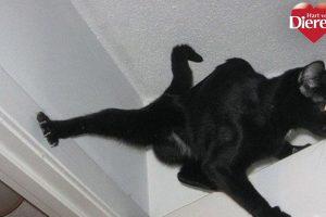 ninja katten