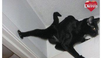 De 11 leukste ninja katten!