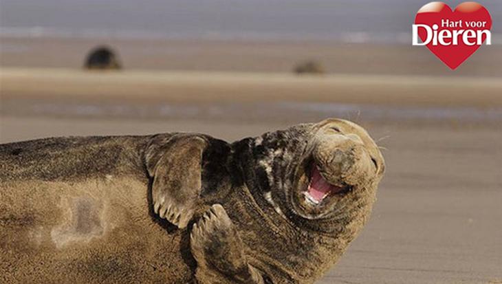 De 10 vrolijkste dieren!