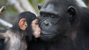 Top 5 slimste dieren