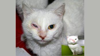 Stichting Kattenhulp Griekenland heeft dringend hulp nodig