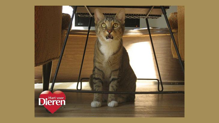 De 14 leukste kattengezichten voor alledaagse situaties