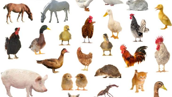 Kies voor dierenwelzijn!