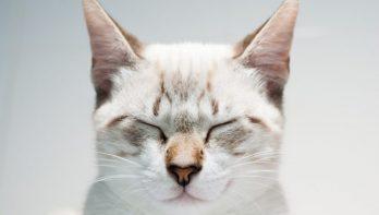 Zen met katten