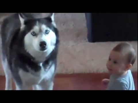 Hond en baby praten samen