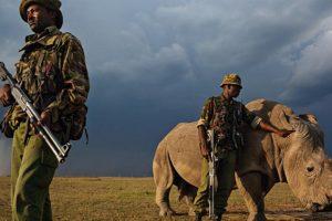 Rhino Rangers