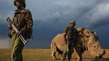 Rhino Rangers beschermen witte neushoorn