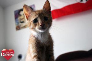 kattengezichten