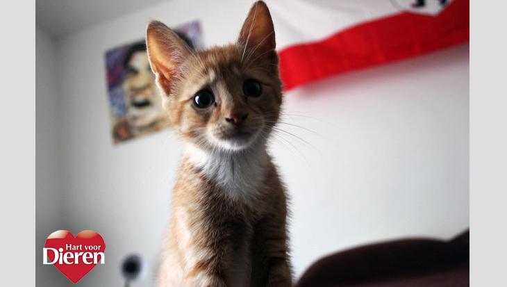 De 13 leukste kattengezichten voor alledaagse situaties