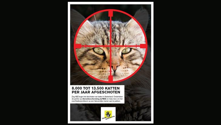 Zuid-Holland verbiedt afschieten zwerfkatten