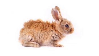 Hartverscheurend PETA onderzoek onthult dierenmishandeling bij Nederlandse fokkers