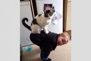 kattenvrienden