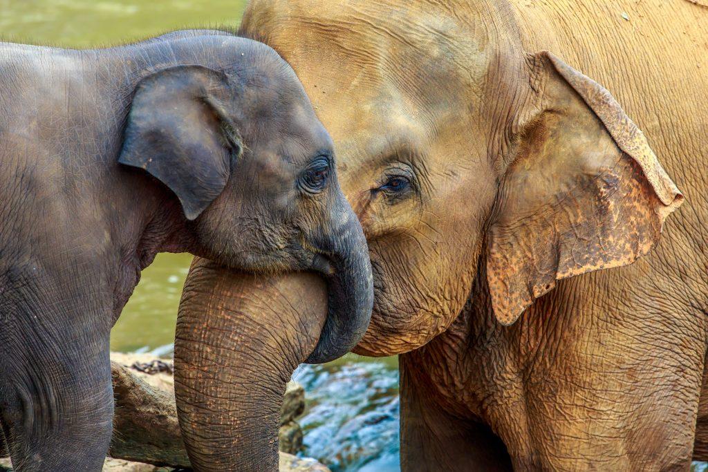 babydieren olifant