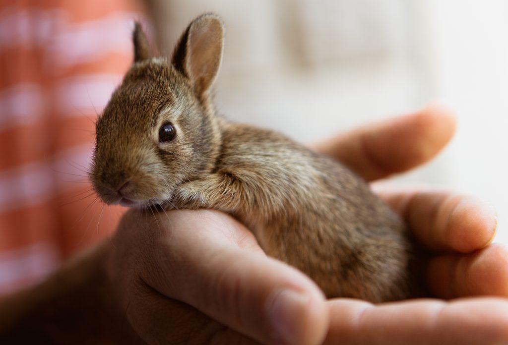 babydieren konijn