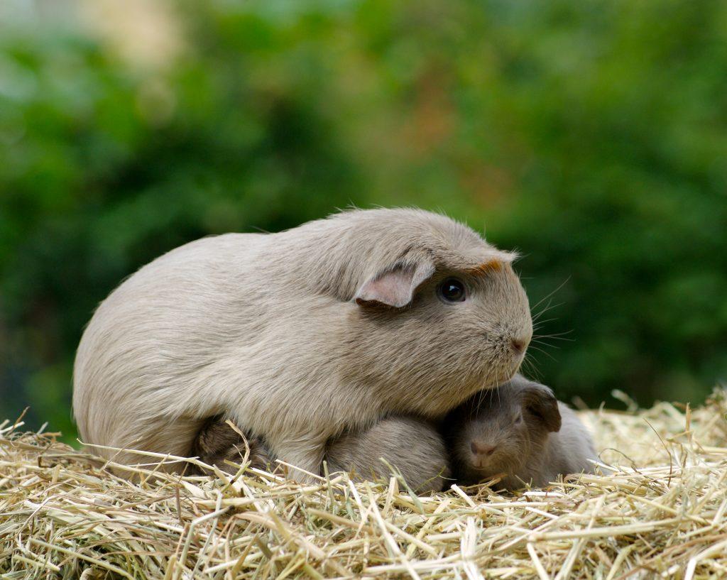 babydieren hamster