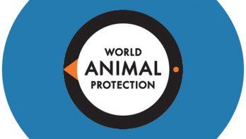 Onwetendheid houdt malafide hondenhandel in stand