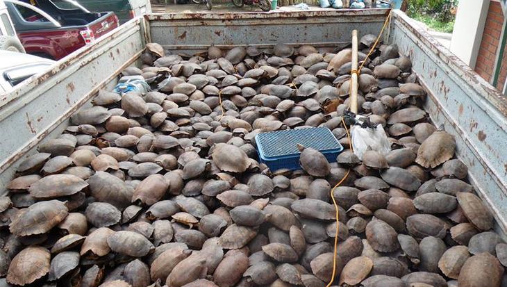 Schildpaddendrama op de Filipijnen