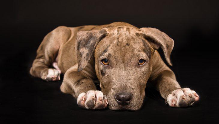 Zwartboek in beslag genomen honden aangeboden aan Tweede Kamer