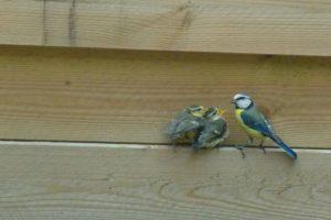 jonge vogeltjes