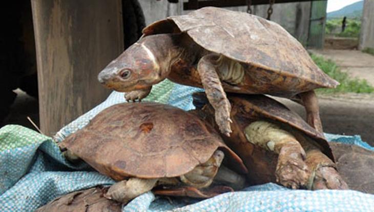 schildpaddenleed