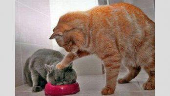 15 ondeugende katten