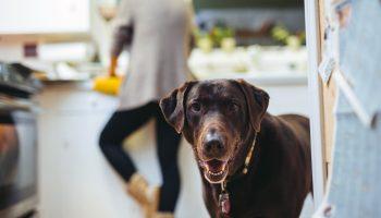 zaken die hondenbaasjes herkennen