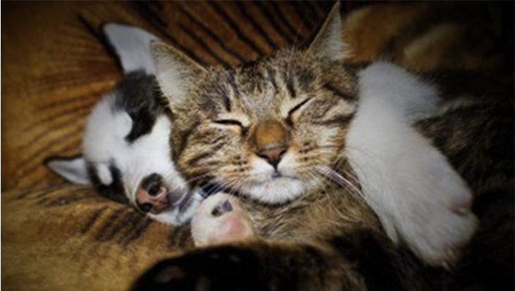 Katten die op honden slapen