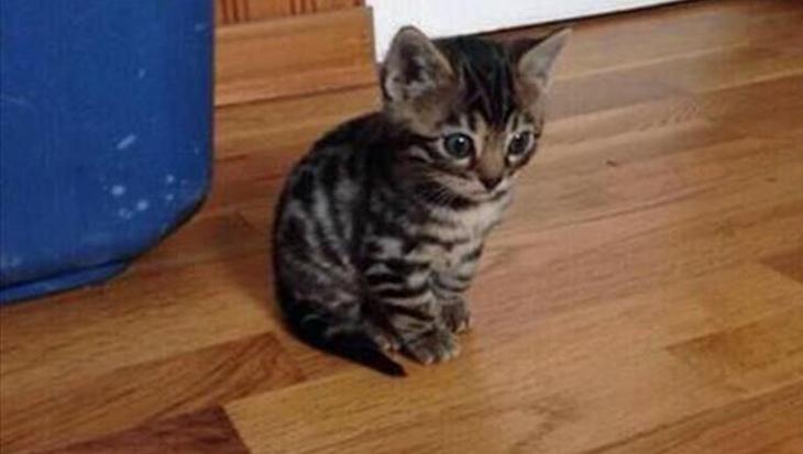 15 leuke Snapchat-foto's met katten