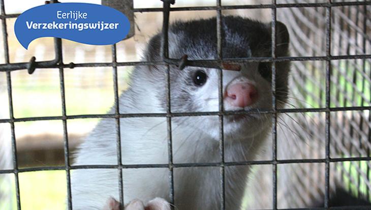 Investeert jouw verzekering in dierenleed?