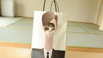 Deze katten zijn geen ster in verstoppertje spelen