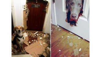 Honden die viezeriken zijn