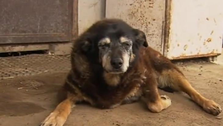 Oudste hond ter wereld, Maggie, gestorven