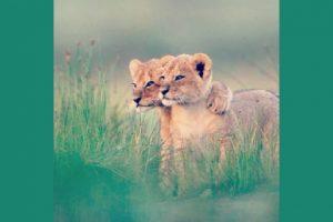 knuffelende dieren