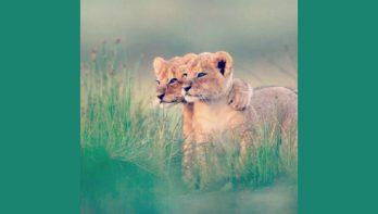 16 knuffelende dieren - deel II