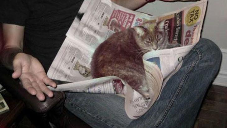 Katten die je niet laten lezen