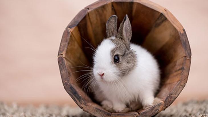 Nieuwe konijnenopvang in Zuidwest Nederland
