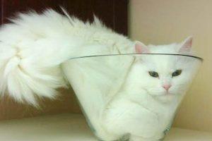 Vloeibare katten